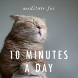 meditate-meditation  cat